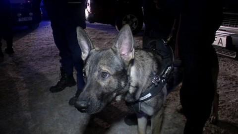 Lavoro da cani: il cane-poliziotto cattura il ladro di una bottiglia di … – Rai News