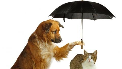 Animali: arriva la prima mutua per cani e gatti – Studio Cataldi