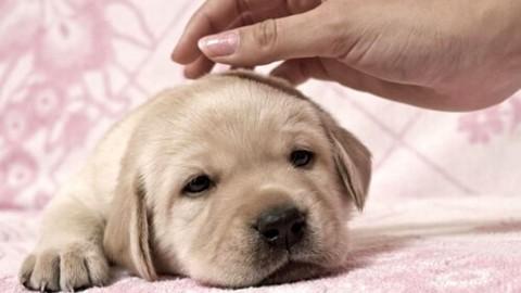 """Una settimana di congedo per chi adotta cani o gatti: """"Fanno parte … – Today"""