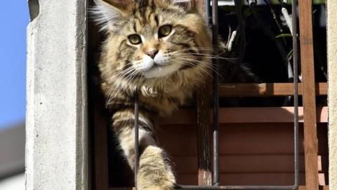 La festa nazionale del gatto si celebra ad Olgiate – VareseNews – Varese News