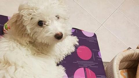 I vantaggi di avere un animale domestico per i malati di Alzheimer o … – Cinquew News