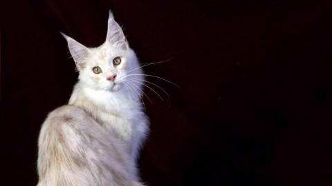 Tutti i più bei gatti del mondo a Firenze | FOTO – Sei di Firenze se – Sei di Firenze se