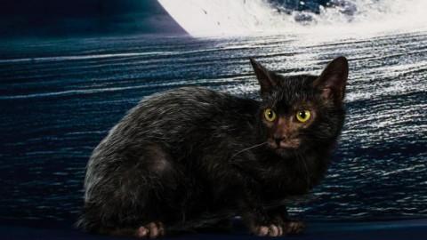 Firenze: i gatti più belli del mondo all'Obihall, 25 e 26 marzo. In … – Firenze Post