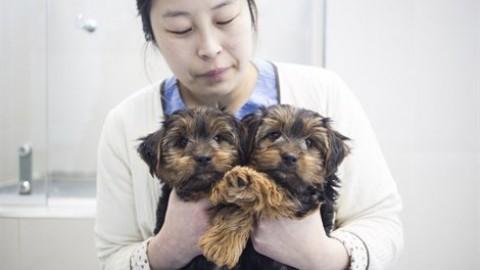 Fareste clonare il vostro cane? – Vanity Fair.it