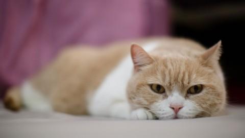 Avere gatti aumenta il rischio di schizofrenia? Probabilmente no – Wired.it