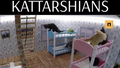 Toglieteci tutto ma non il gatto – Donna Moderna
