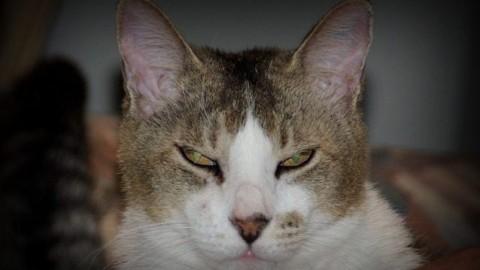 Il tuo gatto non sta meditando di ucciderti, potresti addirittura piacergli – Scienze Fanpage