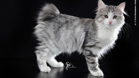 Un gatto per amico a Firenze – Toscana News 24