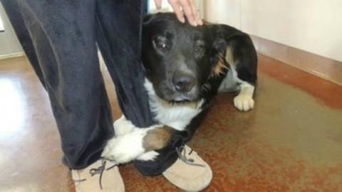 Perché i cani si accucciano ai nostri piedi (e cosa vuol dire) – Velvet Pets Italia (Blog)