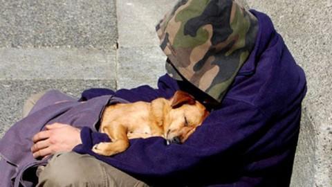 Sanzioni per chi mendica con un animale domestico, Rubini … – AnconaToday