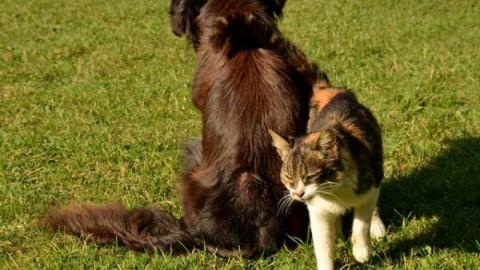 Cane o gatto: chi è il più intelligente? – focusjunior.it