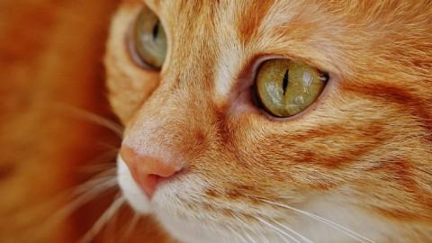 Il vostro gatto preferisce voi al cibo – Galileo