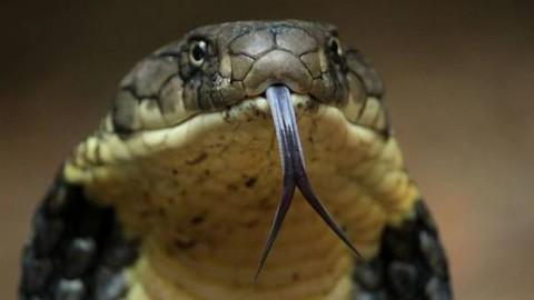 Tutti in allarme: «Grosso serpente in giardino!»: ma non era di plastica – Il Gazzettino