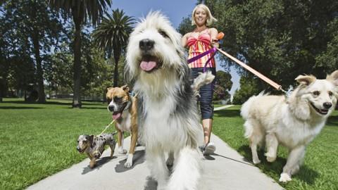 Dog Sitter e Dog Walker: anche a Napoli sbarca il mini-corso da … – Il Mattino