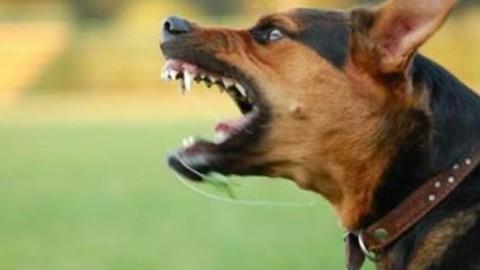 Torino, bambina di 2 anni cade sul cane che dorme: azzannata al … – Il Messaggero