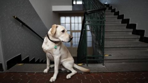 Via libera agli animali in condominio – Inchiesta Sicilia
