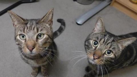 Il gatto muore, scoprono la sua vita segreta grazie ad un messaggio … – Leggo.it