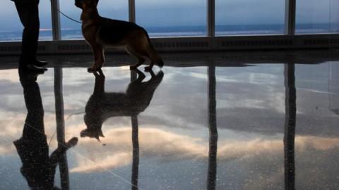 Come i cani sono capaci di trarci in inganno – National Geographic Italia
