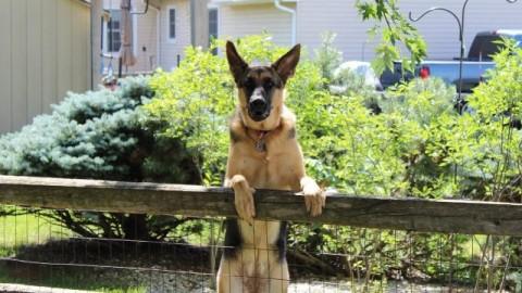 Quel cane solo nell'area di San Piero. Una storia curiosa… – OK!Mugello. Notizie cronaca attualità (Comunicati Stampa)