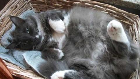 Pian Camuno, caccia al torturatore di gatti – Qui Brescia