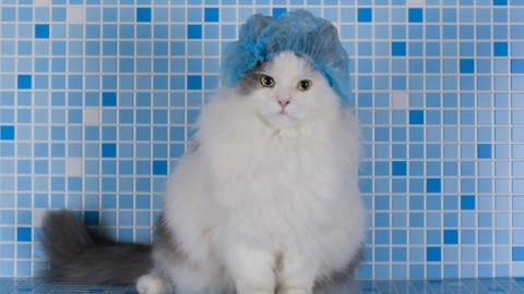 Perché il gatto gioca nella vasca? – GreenStyle
