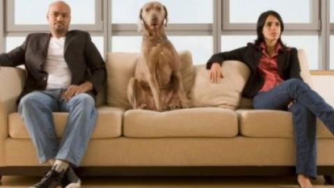 Animali domestici: con chi resta il pet dopo la separazione? – Amando.it