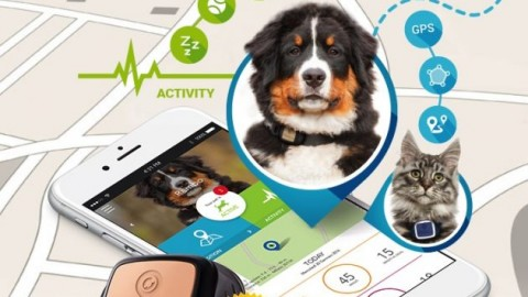 Kippy Vita, GPS e Activity Monitor per il tuo animale domestico … – iPhoneItalia – Il blog italiano sull'Apple iPhone