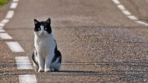 Cani e gatti soli in strada? Regole d'oro per avvicinarli senza creare … – Velvet Pets Italia (Blog)