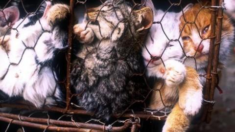 Svolta epocale a Taiwan: vietato il consumo di carne di cane e gatto – Velvet Pets Italia (Blog)