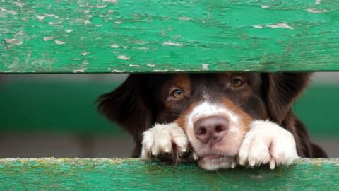 A Pizzoferrato chi adotta un cane non paga le tasse comunali – Chietitoday