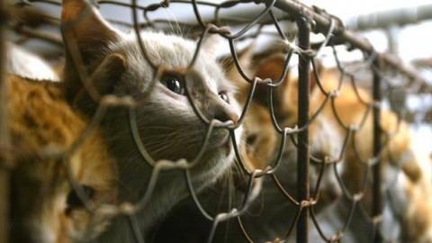 Taiwan, svolta storica: vietato mangiare carne di cane o gatto – Il Messaggero
