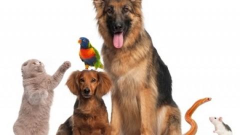 Tutto per la cura del vostro animale domestico – Il Tabloid (Satira) (Comunicati Stampa) (Blog)