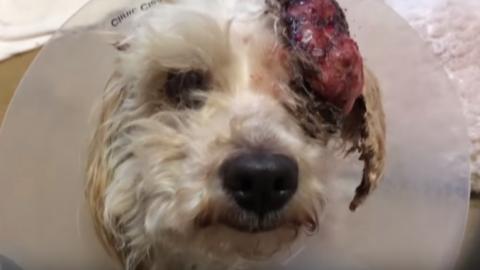 Cane sta per essere abbattuto: animalisti lo salvano – Notizie.it