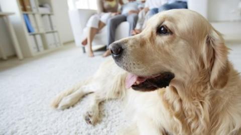 Animali, il cioccolato è ''veleno'' per i cani – Palermomania.it