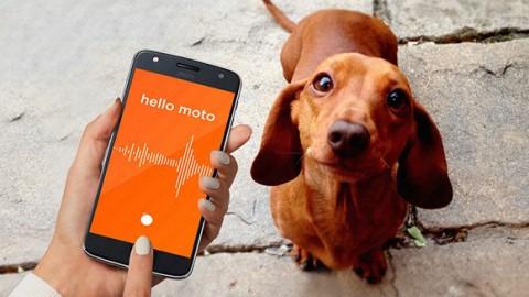Una Moto Mod per Moto Z per comprendere il migliore amico dell … – PuntoCellulare.it