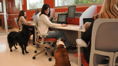 Perché avere un animale in ufficio – sdamy – il mondo visto in un blog (Blog)
