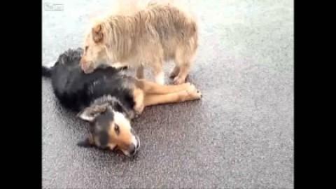 Il vaccino naturale contro le allergie? Cani e gatti in casa … – SiciliaInformazioni.com