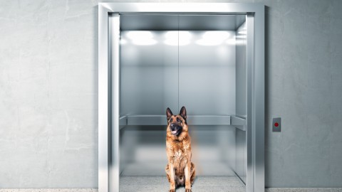 Condominio: è possibile portare animali in ascensore? – Studio Cataldi