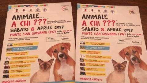 """""""Animale… a chi???"""" Una giornata in piazza con e per il tuo migliore … – Umbria Journal il sito degli umbri"""