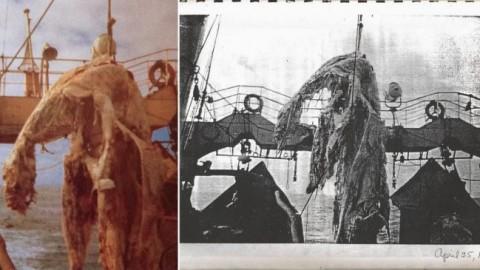 """La Storia del """"Mostro"""" pescato dalla Zuiyu Maru nel 1977 … – Vanilla Magazine"""