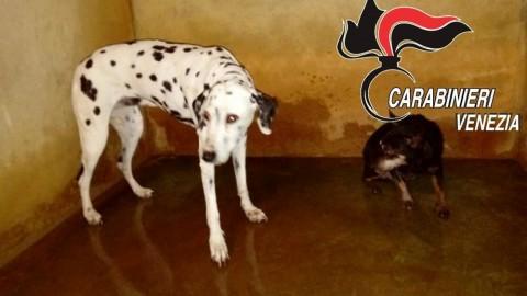 In preda alla rabbia bastona il proprio cane allo sfinimento: lesioni … – VeneziaToday