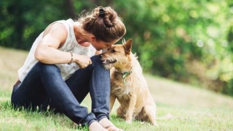 A chi lasciare gli animali quando si parte per un viaggio? – ViaggiNews.com