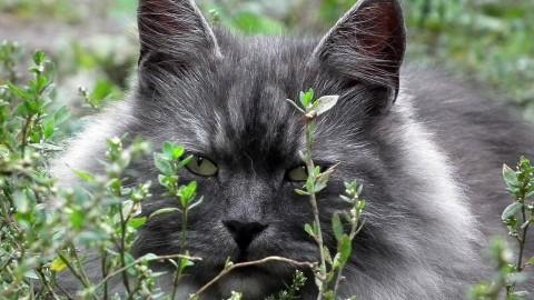 Piante anti gatto – Atuttonet.it