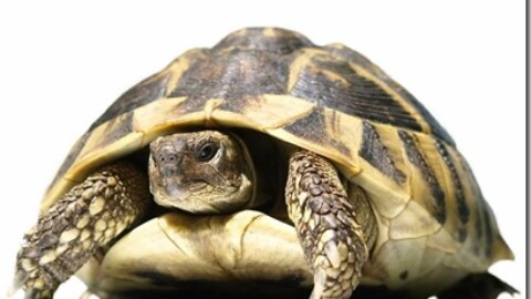 Alimentazione delle tartarughe terrestri