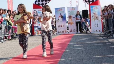 Friuli Dog Show, originale sfilata di bellezza per cani di razza e meticci – Il Gazzettino