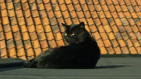 Gatti rapiti e poi ritrovati morti davanti alla casa del padrone – InfoVercelli24