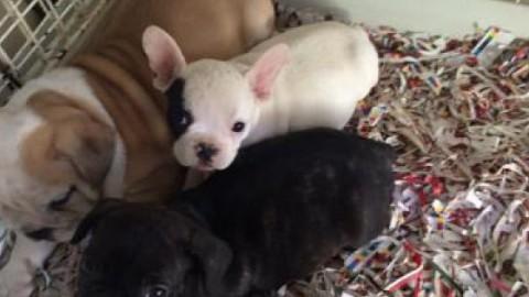 Animali: importati illegalmente 8 mila cuccioli di cane e gatto a … – La Sicilia