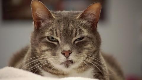 """""""I gatti possono far venire il cancro alla prostata"""": studio scopre il … – Leggo.it"""