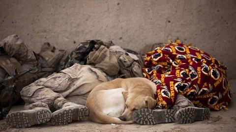 Chi dà da mangiare a un cane randagio è responsabile del suo … – LifeGate