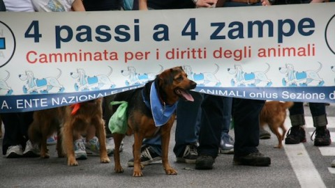 """Monza, domenica tutti al Parco con il proprio cane: torna """"4 Passi a … – MBnews"""
